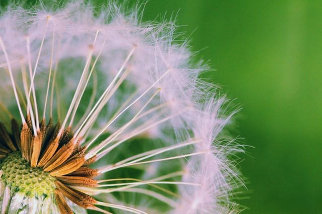 Be like a dandelion seed. Break free from the norm and let the wind of creativity carry you.